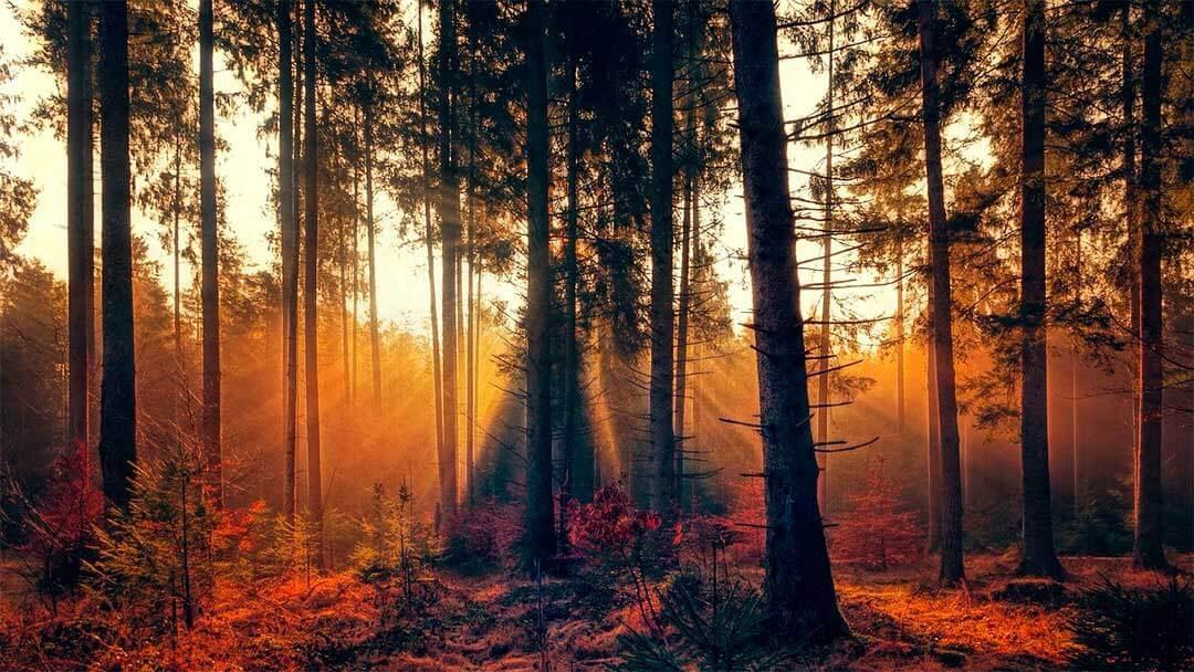 energia luminosa significado